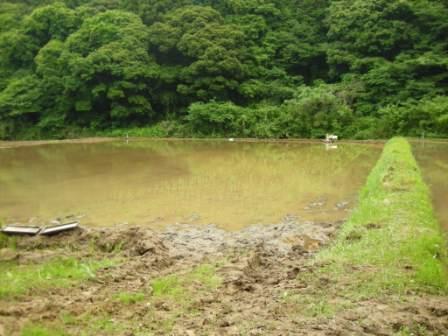 深水での田植え.jpg